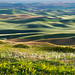 Palouse Light and Shadow by Ryan McGinty