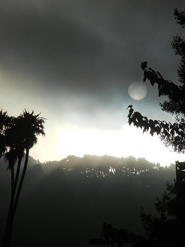 DSCN9202 _ Fog & Sun, Berkeley, CA