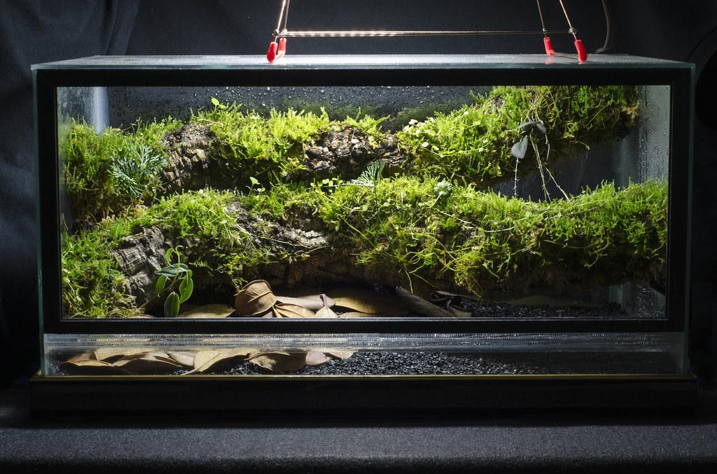 10 gal  epiphyte branch vivarium