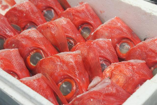 13582298935 bd08b69907 z Adentrándonos en el Mercado de Tsukiji (Tokyo)