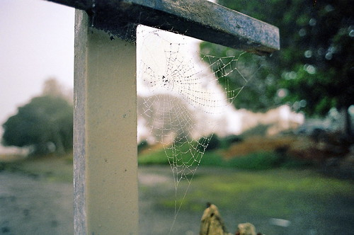 droplets on cobweb.