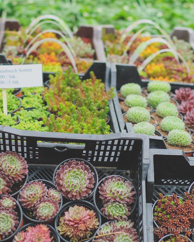 botanischergarten_suc (1 von 1)