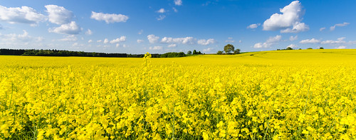 blue sky panorama field yellow clouds landscape bayern bavaria pano himmel wolken gelb blau rapsfeld rapefield nikond7000