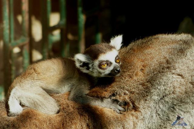Zoo Bratislava 18.04.2015 215