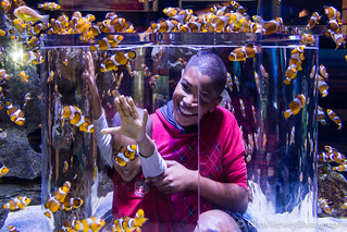 Western clownfish tank