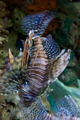 Ripley's Aquarium 75