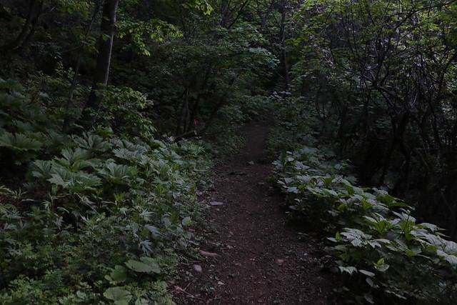 2014-06-15_00205_四阿山.jpg