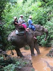 jungle elephant walk