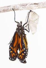 [フリー画像素材] 動物 2, 昆虫, 蝶・チョウ ID:201205161000