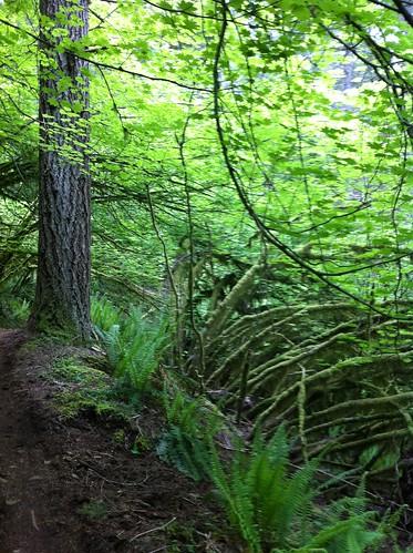 usa washington unitedstates biking mountainbiking capitalforest quackhack mimaporter