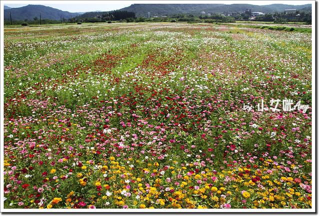 滿州花海IMG_1453