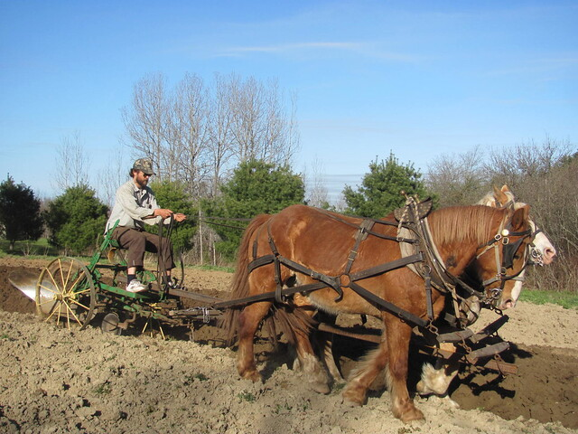 horse powered plowing 2013