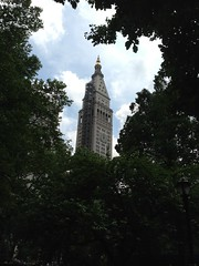 Clock tower through the trees