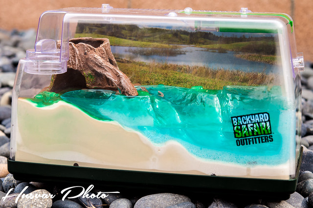 a summer of bug wrangling {Backyard Safari Outfitters ...