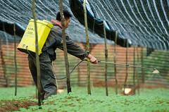 慣行農業將農藥、化肥帶入中藥材種植。(圖片來源:台灣綠色和平組織)