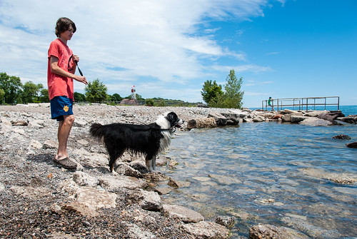 Canine cool-off in the Beaches - #182/365 by PJMixer