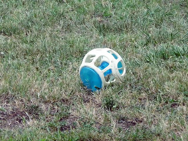 dog toy in yard flickr photo sharing