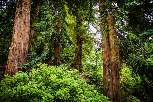 trees green nature forest outdoors natural lush