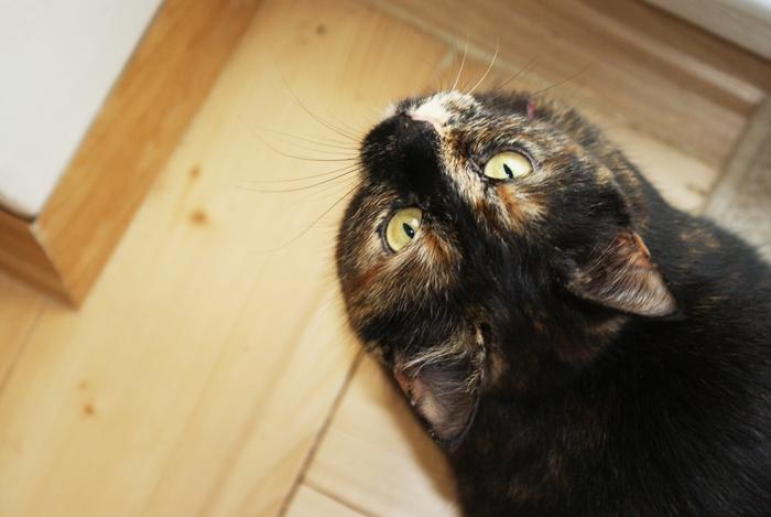czarny kot z plamkami