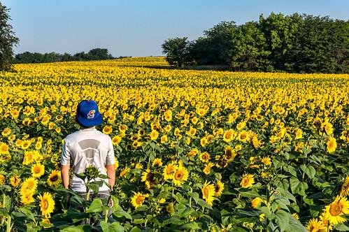 sony sunflower kansas nex6