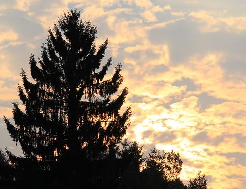 morning sky silhouette germany village cloudy thuringia conifer nadelbaum fleecycloud schackendorf schäfchenwolke