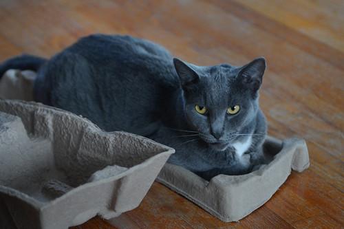Lucky's Box