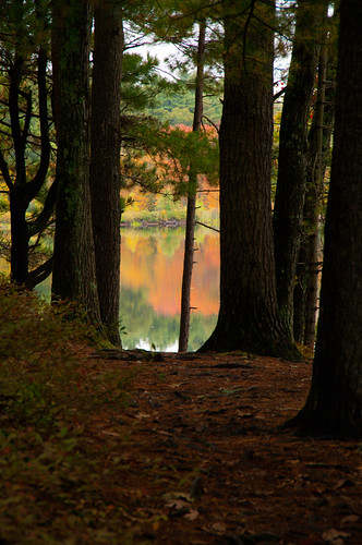 autumn trees color forest reflections woods massachusetts andover haroldparkerstateforest