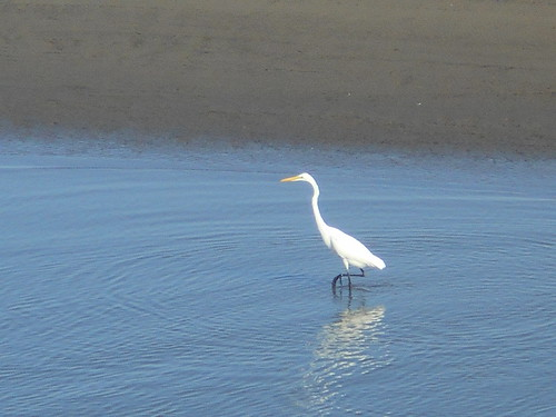 heron? crane? egret?