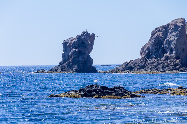 Seagull & rocky outcroppings