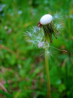 leaving seeds