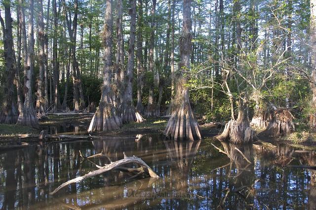 view 0006 Gator Hook Trail, Big Cypress National Preserve, Florida, USA