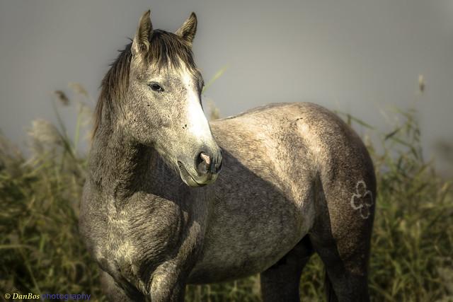 Horse in Camargue