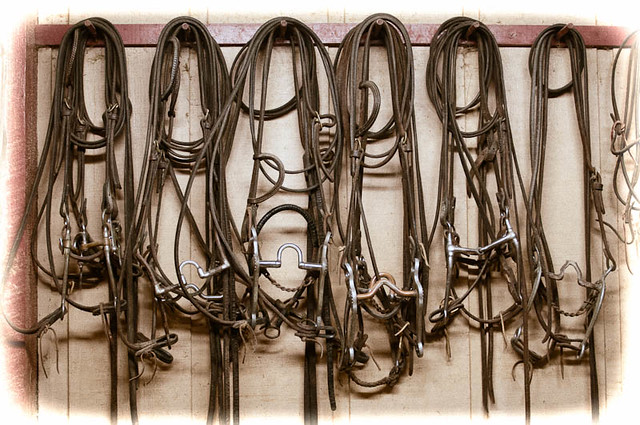 Bits and Bridles