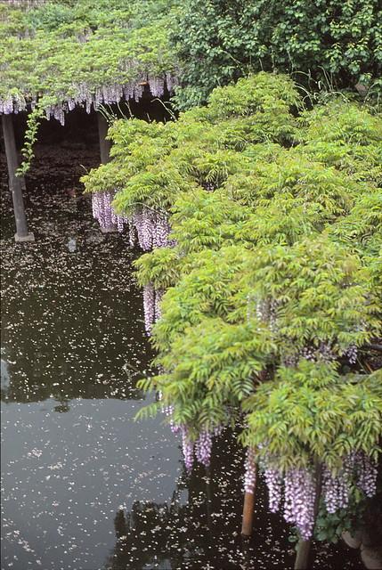 亀戸天神 1988