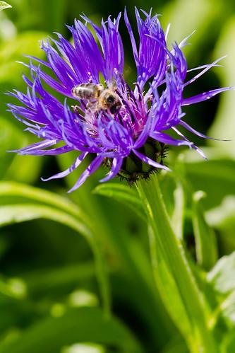 2012_05_Flowers-186