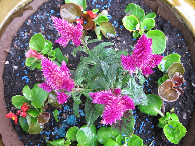 Pots, tubs, window boxes and containers | Gardening tips and