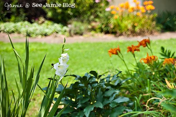 flower garden ~ June 2012
