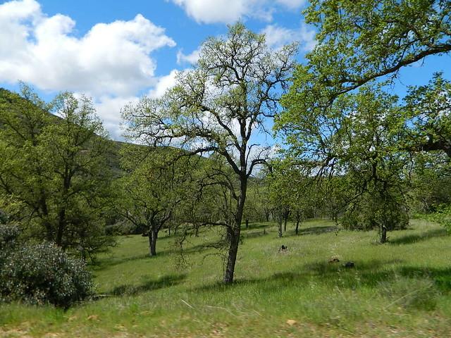 Springtime San Luis Obispo