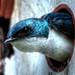 Oiseau/Bird HDR Bécancour, QC, CAN