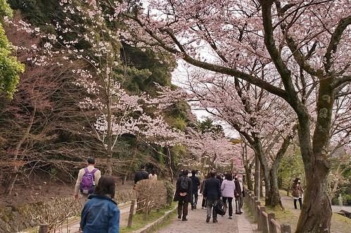 【写真】2013 桜 : 哲学の道/2018-12-24/IMGP9192