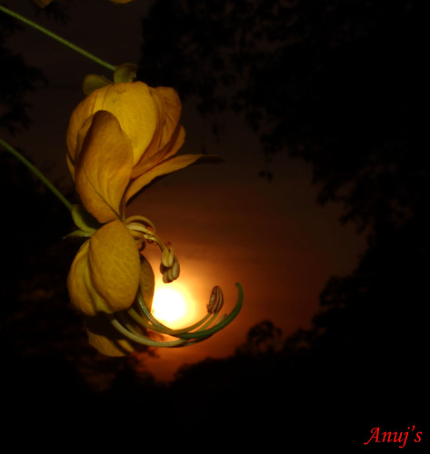 sunset sun flower yellow canon evening delhi yellowflower newdelhi jnu beautifulevening canont3i
