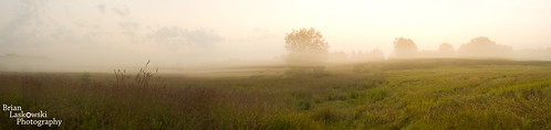 morning panorama nature field fog sunrise landscape michigan goldenhour roselake blinkagain