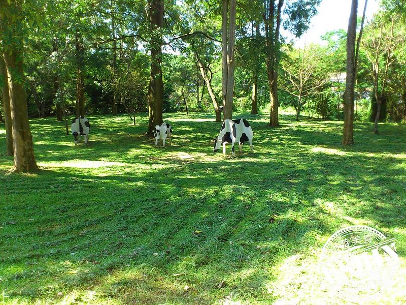 台中旅遊景點|東海大學之路思義教堂-造型牛