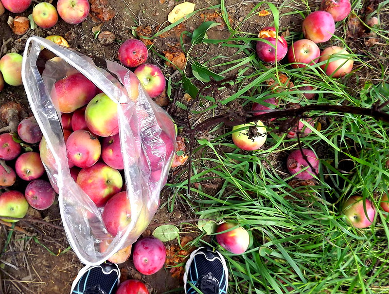 Apple Picking 2