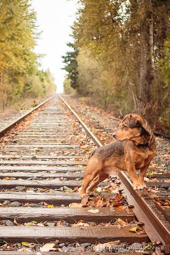 Train Tracks-9508