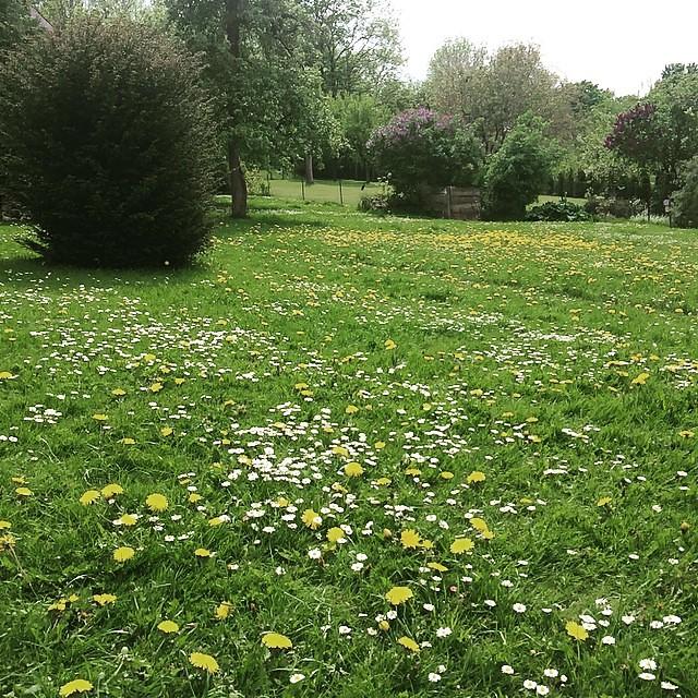 Einfach Mal Nicht Den Rasen Mahen Und Stattdessen Die Blumenwiese
