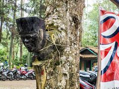 Pohon Bercabang Patung Mirip Kepala Manusia