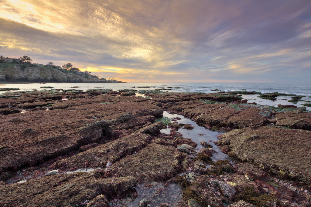 Tide Pools, La Jolla Shores