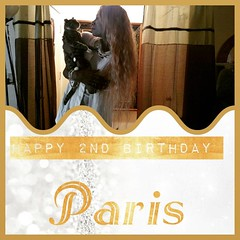 Happy 2nd Birthday today to my oldest baby my kitty cat Paris, mommy loves you okay that part!* #Paris #HappyBirthday #Birthday #CatLover #SecondBirthday #Bday #BdayGirl #BdayCat #Cat #CatBirthday #AnimalBirthday #Animals #Dogs #Puppies #KittyCat #Kittens