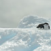 Chinstrap Penguin by naturalturn